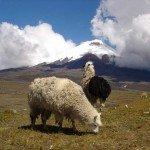 Ecuador Horse Riding Trails Photo40