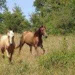 France Aveyron Farmhouse Photo1