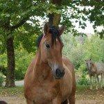 France Aveyron Farmhouse Photo9