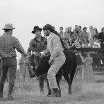 Horse Riding Holidays - La Camargue France - Bull 1