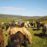 Iceland Golden Circle Trail Photo12