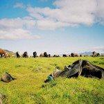 Iceland Golden Circle Trail Photo15