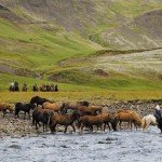 Iceland Golden Circle Trail Photo17
