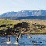 Iceland Golden Circle Trail Photo2