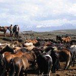 Iceland Golden Circle Trail Photo21