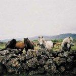Iceland Golden Circle Trail Photo28
