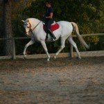 Italy Classical Dressage Tuscany Photo1
