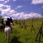 Italy Classical Dressage Tuscany Photo19