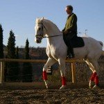 Italy Classical Dressage Tuscany Photo4