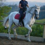 Italy Classical Dressage Tuscany Photo5