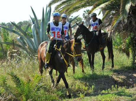 Endurance Training | Horse Riding Holidays Italy