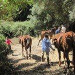 Italy Sardinia Trails Photo10