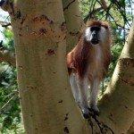 Kenya Borana Safari Lodge Photo21