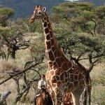 Kenya Borana Safari Lodge Photo22
