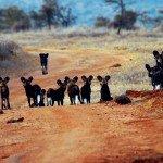 Kenya Borana Safari Lodge Photo25