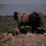 Kenya Borana Safari Lodge Photo30