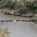 Kenya Gordies Masai Mara Photo1