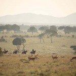 Kenya Gordies Masai Mara Photo12