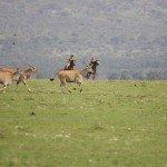 Kenya Gordies Masai Mara Photo13