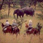Kenya Gordies Masai Mara Photo24
