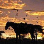 Kenya Gordies Masai Mara Photo8