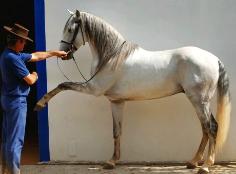 Classical Dressage | Horse Riding Holidays Portugal