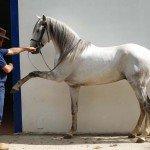 Portugal Classical Dressage Photo3