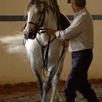 Portugal Classical Dressage Photo4