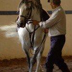 Portugal Classical Dressage Photo4