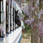 Portugal Classical Dressage Photo6