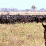 Raw Botswana Photo12