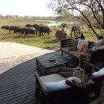 Raw Botswana Photo2