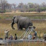 Raw Botswana Photo7