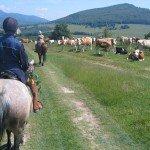 Romania Transylvania Trail Photo10