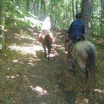 Romania Transylvania Trail Photo9