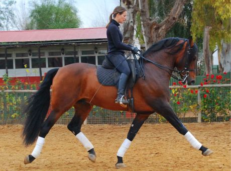 Dressage Soto Clinics | Dressage Soto Clinics | Horse Riding Holidays Spain