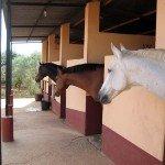 Spain Dressage Soto Clinics Photo12