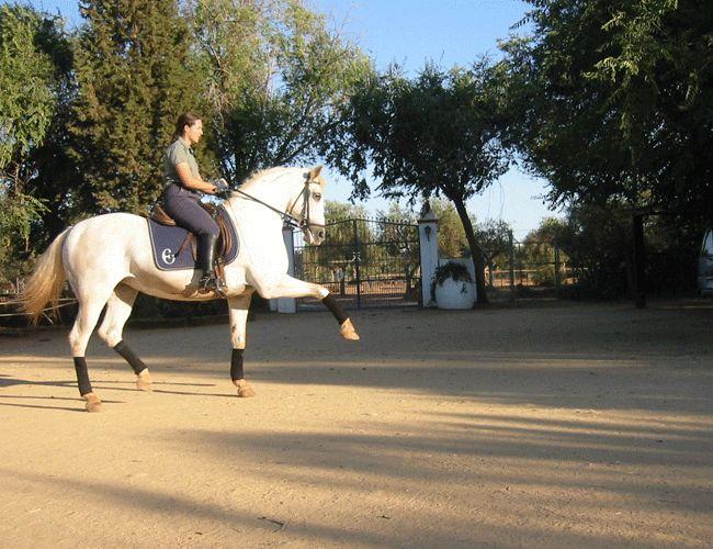 Spain Dressage Soto Clinics Photo20