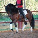 Spain Dressage Soto Clinics Photo22
