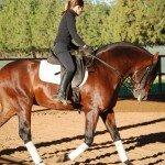 Spain Dressage Soto Clinics Photo3