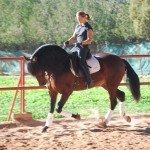 Spain Dressage Soto Clinics Photo5