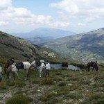 Spain Sierra Nevada Trail Rides Photo3
