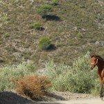Spain Sierra Tejeda Photo22