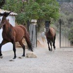 Spain Sierra Tejeda Photo31