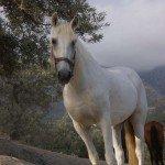 Spain Sierra Tejeda Photo7