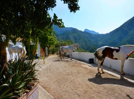 Sierra Tejeda | Horse Riding Holidays Spain