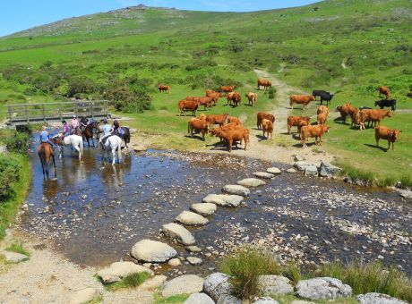 Cattle Herding Farm | Horse Riding Holidays UK