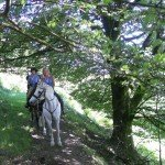 UK Cattle Herding Farm Dartmoor Photo1