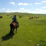 UK Cattle Herding Farm Dartmoor Photo11