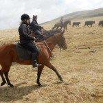 UK Cattle Herding Farm Dartmoor Photo12